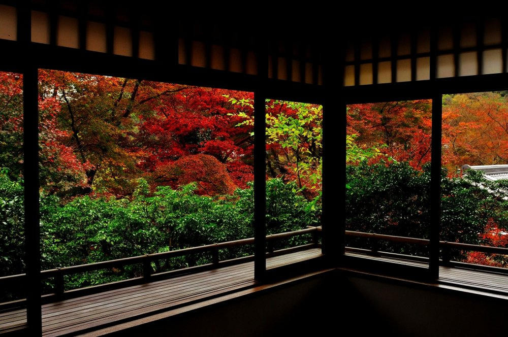 書院二階より瑠璃の庭を臨む、眩い秋にしばし言葉を忘れる。瑠璃の庭を一望する至福の一時。何物にも変え難い