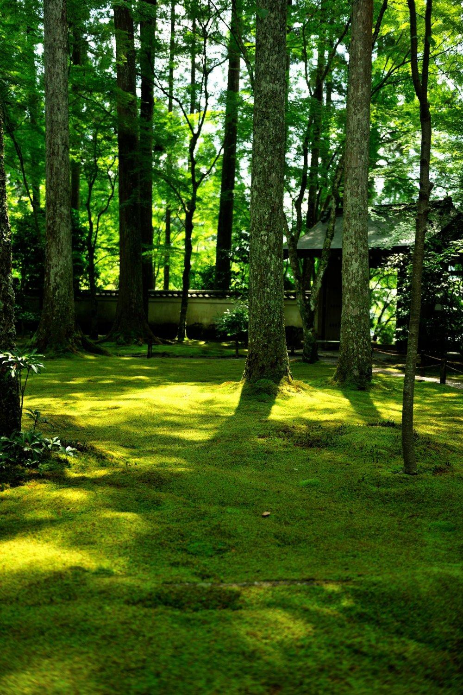 朱雀門前の一面の苔庭。翠輝く苔に陽光が降り注ぐとビロードのような光沢感が出る