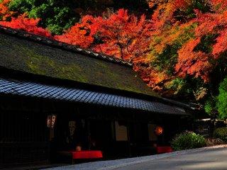 燃えるような紅葉をバックに佇む茶屋は一年中でもっとも忙しい時期を迎える