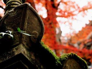苔むす石灯篭 目に付くもの全てが癒しの対象