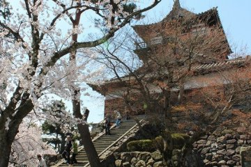福井「丸岡城」散策