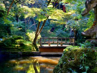 Sunlight filters through the trees to illuminate this pond and bridge