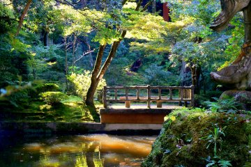 <p>Sunlight filters through the trees to illuminate this pond and bridge</p>