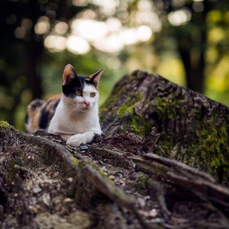 후시미 이나리 타이샤의 고양이들