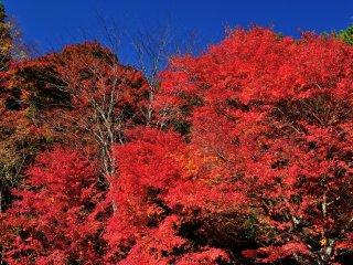 青空をバックにまさに紅葉が燃えている