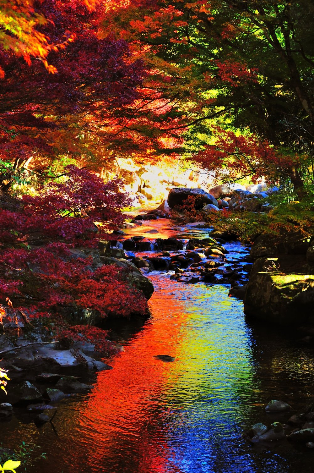 紅葉のトンネルが演出する、まさに虹色の渓谷美