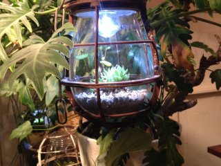 Light bulb terrariums both illuminate the cafe room and bring nature inside
