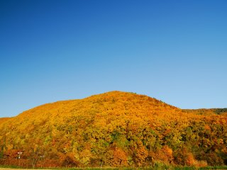 The color of autumn leaves in Hokkaido is a little different from the color in other parts of Japan