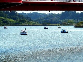Anda dapat menaiki perahu angsa di danau ini!