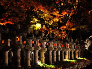 An army of night lanterns line the walkway