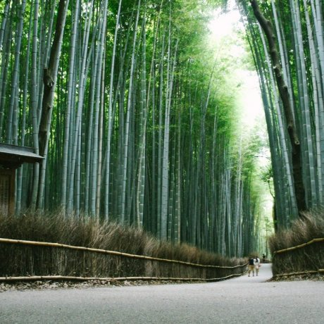 Arashiyama and Bamboo Forest