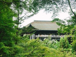 Aula utama Kiyomizu-dera terlihat dari kejauhan
