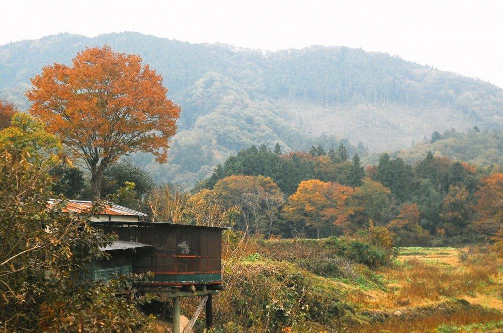 Pedesaan Tochiya didominasi oleh pepohonan yang menguning di musim gugur