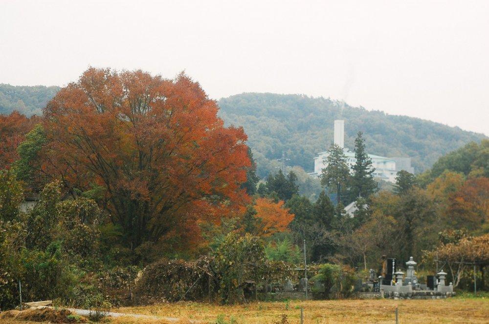 Musim Gugur di Desa Tochiya - Saitama - Japan Travel