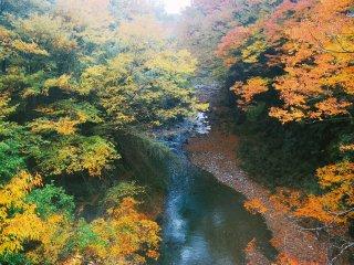 Sebuah sungai yang terlihat cantik dengan dedaunan musim gugur