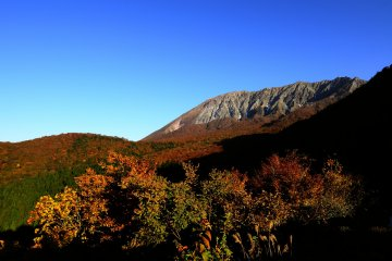 Autumn at Mt. Daisen's Beech Forest