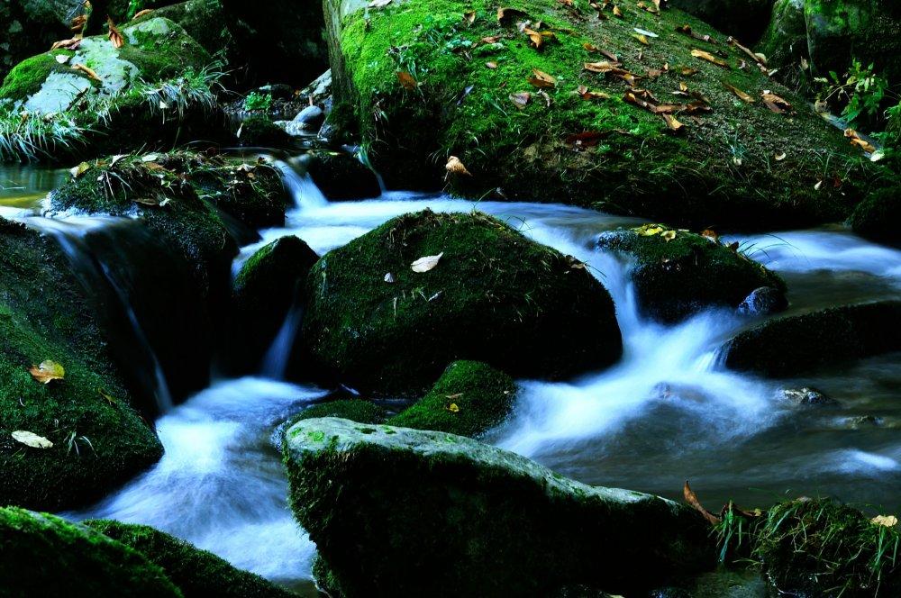 ここ木谷渓谷の苔むした岩、とても深い緑、まるで扁平のマリモのようだ