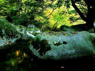 淵の澱みに翠が映る