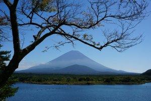 ที่ทะเลสาบ Shojiko กิ่งไม้ยังต้องหลบให้ เพราะวิวฟูจิมันสวยจริงๆ