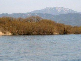 早春3月の九頭竜川岸辺はまだ草も茶色のままだ