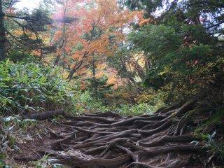 ไม่เชิงใบไม้เปลี่ยนสี แต่อยากให้เห็นสิ่งที่ต้นไม้ต้องทำเพื่ออยู่รอดที่นี่ ดูรากดิ