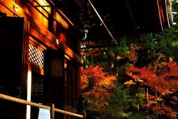 Autumn Foliage of Eikando, Kyoto: 1
