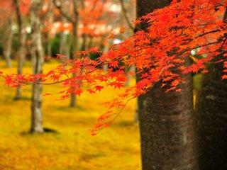 많은 관광객들이 단풍 나들이로 가을에 많이 찾는 곳이기도 하다.