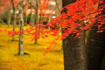 <p>많은 관광객들이 단풍 나들이로 가을에 많이 찾는 곳이기도 하다.</p>
