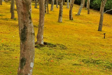 <p>이 정원은 일본에서 최고로 많은 종류의 이끼(130종)가 있기로 유명하고, 단풍 나무도 200그루가 심어져 있다.</p>