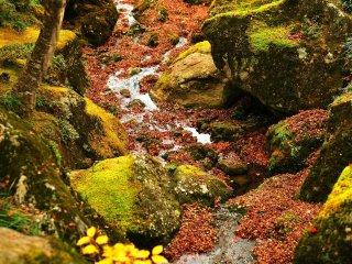 미술관 입구에 흐르는 조그마한 시냇가. 물 위로 떨어진 단풍 잎들이 너무나도 아름다운 모습을 보여준다.
