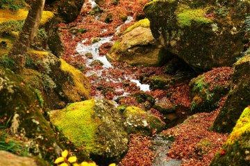<p>미술관 입구에 흐르는 조그마한 시냇가. 물 위로 떨어진 단풍 잎들이 너무나도 아름다운 모습을 보여준다.</p>