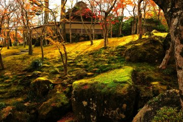 <p>석양에 빛나는 정원의 나무들과 이끼</p>
