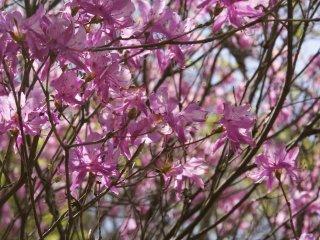 Warna-warni yang indah saat musim semi!