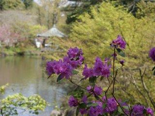 Pemandangan #1 Taman di Kuil Naritasan