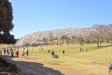สวนป่า Negishi โยโกฮามา