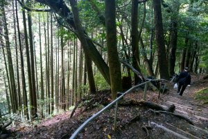 เส้นทางเดินป่าท่ามกลางธรรมชาติอันเขียวขจี บริเวณนี้เป็นเส้นทางที่ตัดผ่านป่าสนยืนต้นสูงสง่าอย่าสวยงาม