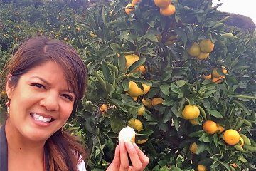 <p>All-you-can-eat mikan picking. Oishii!</p>