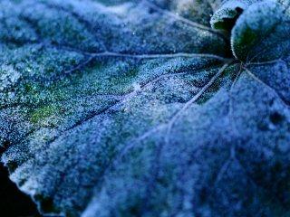明け方の気温-1℃、吐く息が真っ白