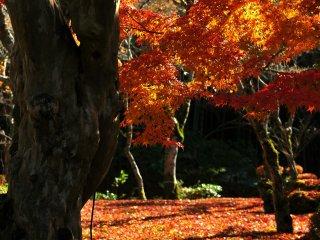 苔の上に積もった散り紅葉がクライマックス