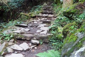 The path to the waterfall has one small incline, near the trailhead
