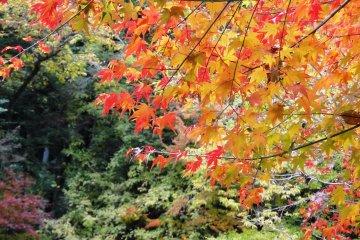 <p>길가의 단풍 나무들</p>