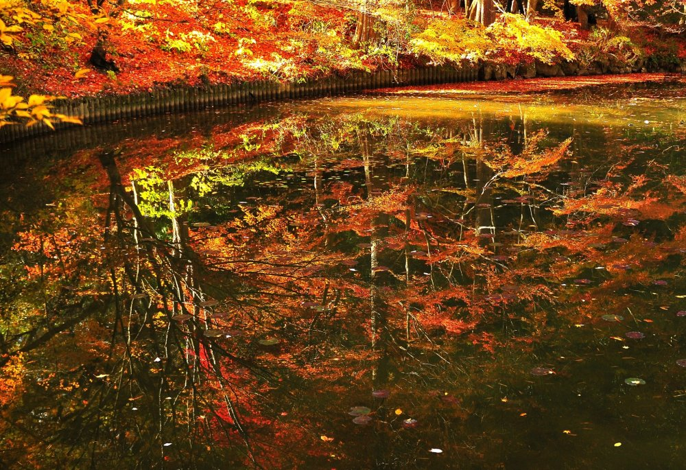 Reflections on the water; the colored leaves hanging over the water look like ripe fruits