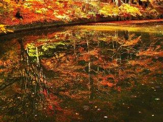 Refleksi yang tampak di atas air; daun-daun berwarna-warni yang menjuntai di atas air tampak seperti buah-buahan yang sudah masak