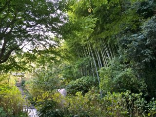 Surrounded by lush greenery at Meigetsu-in in the month of October
