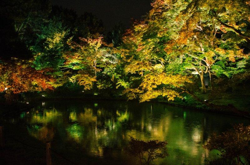 고다이지 절 옆 연못에 비춰진 조명 불빛과 나무들