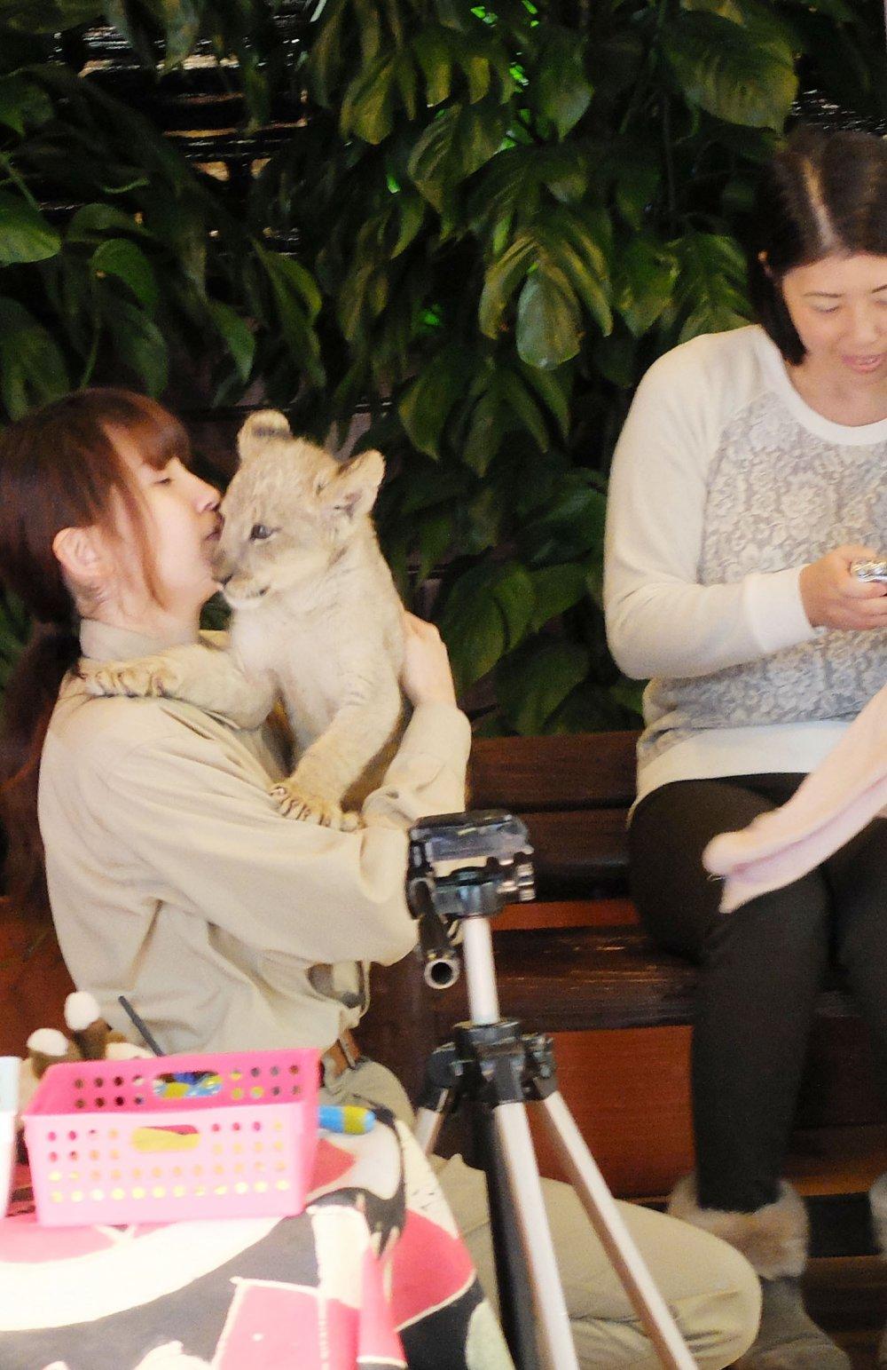 Bạn có thể chụp ảnh với một con sư tử con sau khi bạn vào công viên chỉ cần kiểm tra lịch trình trước thời hạn kể vì sư tử con không phải là luôn sẵn có.