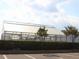 百合の球根や切り花用百合の栽培をする温室も完備している