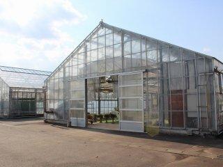 百合以外にもいろいろな植物や花の栽培がなされている