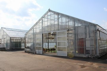 백합 이외에도 다양한 식물과 꽃의 재배가 이루어지고 있다