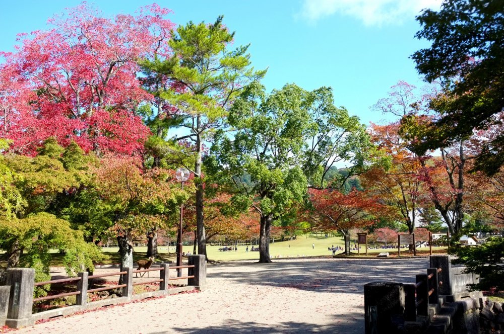 The colorful park